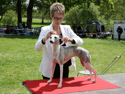 Expositions Canines Fame