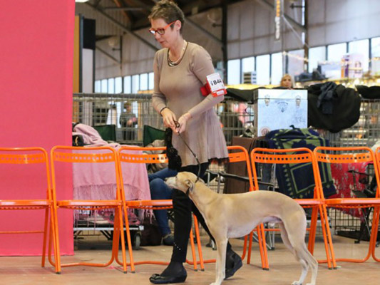Expositions Canines Gandhi