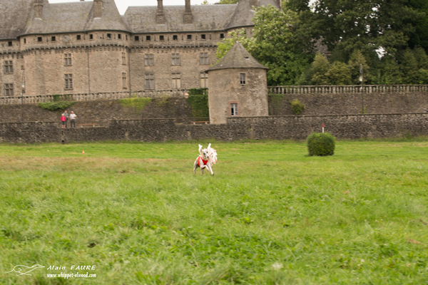 pvl-coursing-levriers-whippets-chateau-